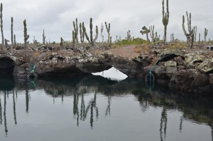 Cacti and natural bridges